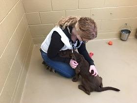 Nicole-at-animal-shelter-280x210
